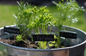 Creating Your Own Herbal Garden