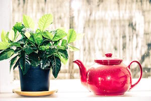 Plant and Teapot