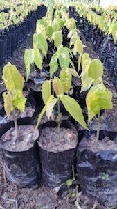 Rows of Seedlings